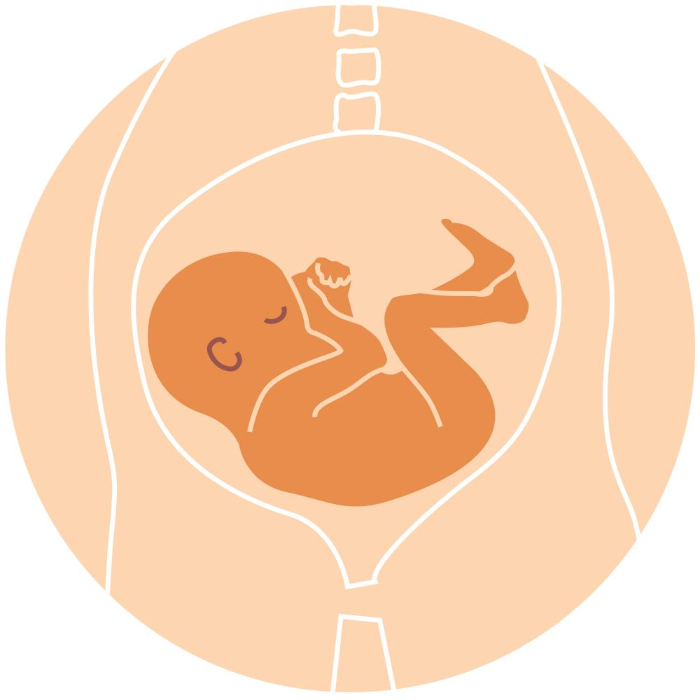 Things You Should Know About Baby's Position in the Womb